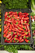 Close-up of red chili pepper in market