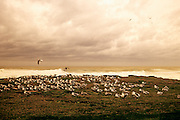 Image of seagulls on the beach at Seal Rock, Oregon, Pacific Northwest (toned black & white conversion)