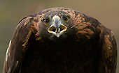 Hawks, Falcons, Eagles