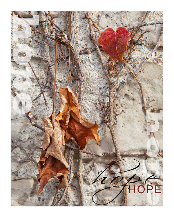 With Jesus there is LIFE and a life of filled with HOPE joy and love. Without Jesus we are simply withered up and hanging on, as illustrated through this photograph.<br /> <br /> This photograph will aide in bringing Hope to Cambodia.