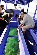 Kenya - Ashoka, Coral Reef Restoration