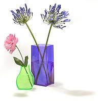 flowers in neon vases