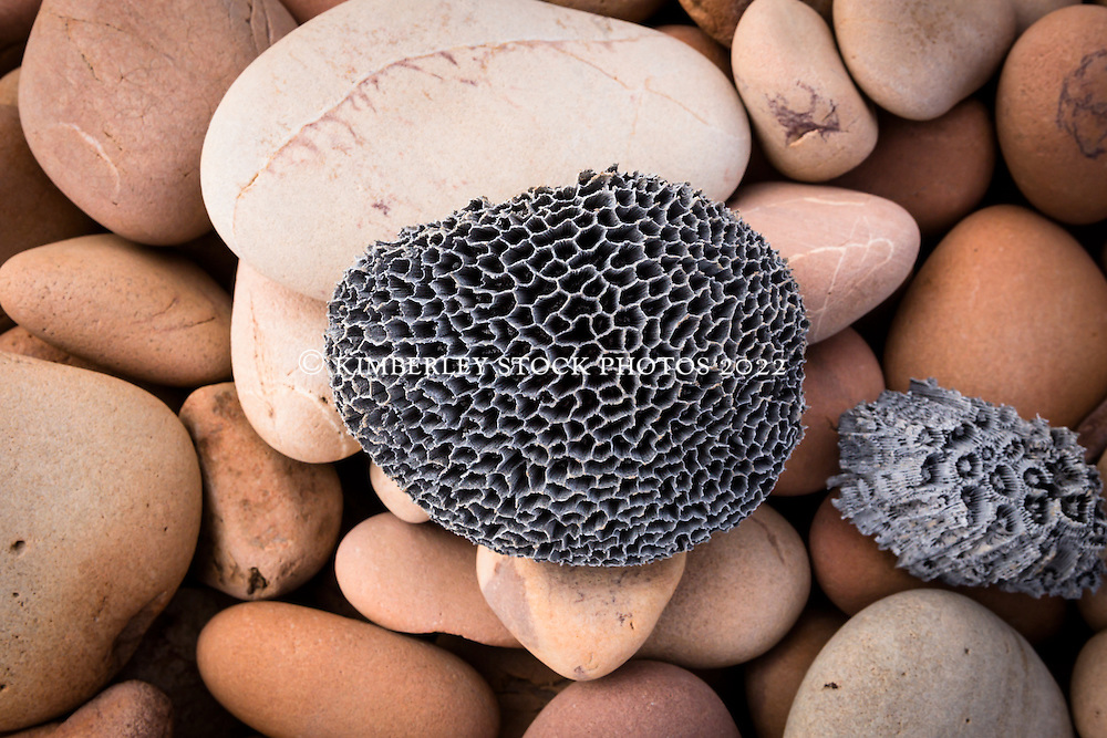 A piece of bleached coral rests on a pile of weathered rocks on the beach at Macleay Island on the Kimberley coast.