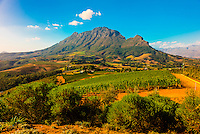 Vineyards, Delaire Graff Wine Estate atop Helshoogte Pass, near Stellenbosch, Cape Winelands (near Cape Town), South Africa.
