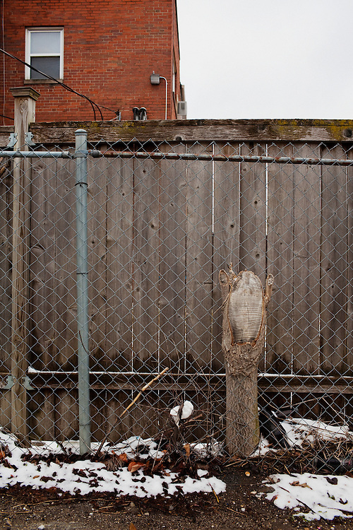 A chopped off tree becomes one with a fence in Columbus, Ohio on Friday, February 25, 2011. Senate Bill 5 would eliminate collective bargaining rights for state workers, which Governor John Kasich claims is a necessary reaction to the budget crisis.
