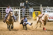 Steer wrestler JD Dolezal makes his run during slack at the Bismarck Rodeo on Saturday, Feb. 3, 2018. He had a time of 15.4 seconds. This photo and more from most runs are available at Bobwire-S.com.