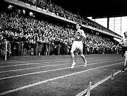 R Delany beating D Ibbotson at Landsdowne Rd..29/07/1957..George Derek Ibbotson MBE (born June 17, 1932 in Huddersfield, West Riding of Yorkshire, England) was an English runner who excelled in athletics in the 1950s. His most famous achievement was setting a new world record in the mile in 1957..Ibbotson was born in Huddersfield and studied at King James's Grammar School in Almondbury. He was of the generation that included other great British milers such as Roger Bannister, Chris Brasher and Christopher Chataway. He was the junior champion in Britain in 1951..After service in the Royal Air Force, Ibbotson returned to competition. In 1956 at Melbourne, he won a bronze medal in the 5,000 meters. After the Games, Ibbotson focused on the mile run, which was probably an error. Ibbotson began the 1957 season running in mile races, as a 5000m or 3 mile runner would often do in the early part of the facing season - to race at a faster pace than he would need in those longer distances. After he had run a particularly fast mile at a Glasgow, an experienced athletics official told the BBC that while it was a very good time, he and many others felt that Ibbotson's greater potential was over 5000m or 3 miles. Unfortunately, somebody then organised one of the many ?miles of the century? and Ibbotson won, probably because Delaney, the 1500m champion at Melbourne the previous year, was boxed in at a crucial point on the final lap. The time was a new world record, taking .8 of a second off John Landy's time of 3.58min set in 1954. The result was that Ibbotson went on running in mile races throughout the season - although also taking part in some longer distance events - and he ran a great number of races and ended the season exhausted. It was not just the number of races but the faster pace at which they were run..Ibbotson never found the same form again...Ronald Michael Delany (06/03/1935), better known as Ron or Ronnie is a former Irish athlete, who specialised in middle d
