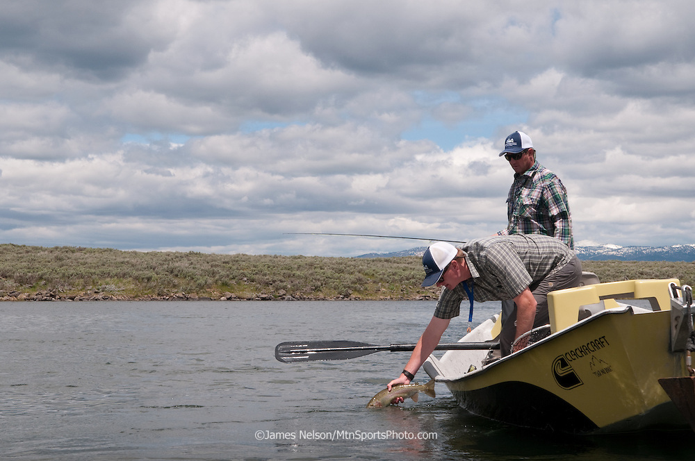 An angler releases a rainbow trout his friend caught while fly fishing from a drift boat on the Henry's Fork of the Snake River, Idaho.