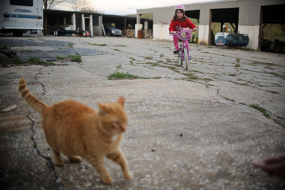 photo by Matt Roth.Wednesday, April 11, 2012..Ron Shriver likes his children to play before bed so they're more likely to go to sleep. Rory Shriver's biking startles a barn cat...Ron Shriver grew up on a large farm house in Pleasant Valley, Maryland, a small township outside Westminster. After his lease was up, he moved back to his parent's home with his two children Rory and Miles, living temporarily in their basement before graduating from McDaniel College in May. After tossing his graduation cap, he and his children will drive cross country to meet up with his wife who has been working on her graduate degree in Alaska. ..Ron Shriver is a retired marine staff sergeant. He is also the first in his family to attend college, thanks to the New G.I. Bill. His wife, a fellow retired Marine, is finishing up graduate school in Alaska. After Ron gets his undergraduate degree from McDaniel College in May, he plans to drive to Alaska with is two children Rory, 6, and Miles, 5. For the move Ron got rid of most of his family's belongings, and after his lease was up, he and his children moved back into his parent's farmhouse.