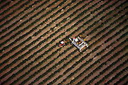 Two row mechanical grape harvester. Central valley, California. USA.
