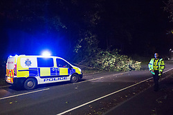 © Licensed to London News Pictures. 16/10/2017. Whitehaven UK. A tree comes down on a road in Whitehaven as Storm Ophelia hits the west coast of Cumbria. Photo credit: Andrew McCaren/LNP