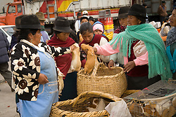 "South America, Ecuador, Saquisili, woman buing guinea pigs (""cuy"") at weekly food and crafts market which draws indigenous people and tourists from surrounding villages"