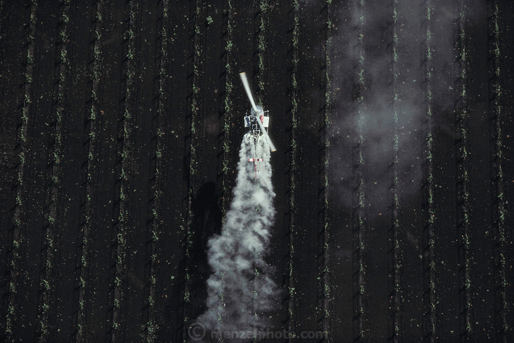 Crop dusting. Spraying wine grape vineyards with sulphur in Napa Valley, California, USA.