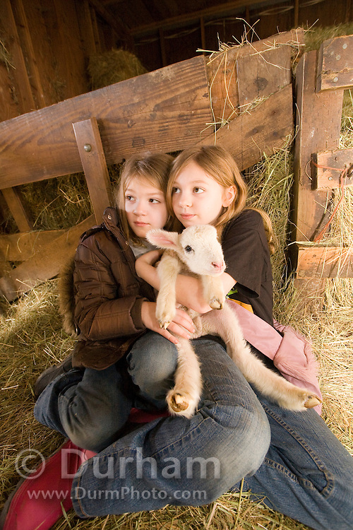 Sisters, 7 year old Kelsey (left) and 9 year old Shenoa, hold a three day old lamb on a Sauvie Island farm, Oregon. Model and property released.
