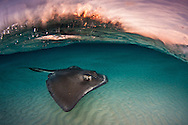 National Geographic Top Ten, Hashtag Challenge #Underwater, March 2016<br />