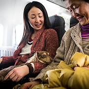 """CHIBA, JAPAN - JANUARY 27 : Women and their dogs are seen in a plane in Chiba, Japan on January 27, 2017. Japan Airlines """"wan wan jet tour"""" allows owners and their dogs to travel together on a charter flight for a special three-day domestic tour to Kagoshima Prefecture, southwestern Japan. As part of the package tour, the owners and their dogs will also get to stay together in a hotel and go sightseeing in rented cars.  (Photo by Richard Atrero de Guzman/ANADOLU Agency)"""
