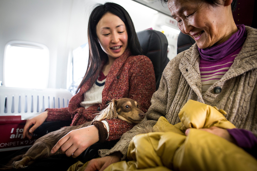 "CHIBA, JAPAN - JANUARY 27 : Women and their dogs are seen in a plane in Chiba, Japan on January 27, 2017. Japan Airlines ""wan wan jet tour"" allows owners and their dogs to travel together on a charter flight for a special three-day domestic tour to Kagoshima Prefecture, southwestern Japan. As part of the package tour, the owners and their dogs will also get to stay together in a hotel and go sightseeing in rented cars.  (Photo by Richard Atrero de Guzman/ANADOLU Agency)"