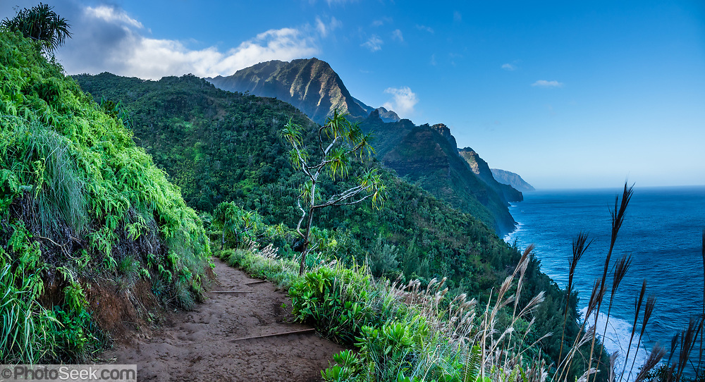 Admire sea cliffs above the Pacific Ocean along the beautiful Kalalau Trail in Na Pali Coast State Wilderness Park, Kauai, Hawaii, USA. A beautiful day hike along the slippery Kalalau Trail goes from Ke'e Beach to Hanakapiai Beach, with a rougher side trip to impressive Hanakapiai Falls. To reach Hanakapiai Valley's waterfall, follow the signed clay trails for a moderately strenuous 8.8 miles round trip with 2200 feet cumulative gain (measured on my GPS), and bring plenty of fresh water. I recommend boots with sturdy tread, hiking poles, plus water shoes for the several stream crossings. Arrive early to get parking at the trailhead in Haena State Park at the end of the Kuhio Highway (Hawaii Route 560). The gorgeous Kalalau Trail was built in the late 1800s to connect Hawaiians living in the remote valleys. No permit is needed for day hiking to Hanakapiai Falls. But hikers going onwards from Hanakapiai Beach to Hanakoa and Kalalau Valleys require a camping permit from the Hawaii Department of Land and Natural Resources (HDLNR). This image was stitched from multiple overlapping images.