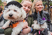 Ludvig a Bichon Frise and Lola a Westy Poodle - A charity Halloween Dog Walk and Fancy Dress Show organised by All Dogs Matter at the Spaniards Inn, Hampstead. London 29 Oct 2017.