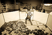 Sweetwater Jaycee Jack Allen checks a snake box to see if there are any more rattlesnakes left in it after being dumped into the main snake pit at the 50th annual Worlds Largest Rattlesnake Round-up at the Nolan County Coliseum in Sweetwater, Texas, on Friday, March 7, 2008. Most snake hunters use long, thin, rectangular-shaped boxes to keep the snakes from smothering each other during transport to the round-up.  Snake hunters begin arriving at 5:00 A.M. on Friday morning to get in line to turn in their snakes.  Some snake-hunting teams can have as much as 950 pounds of rattlesnake alone...