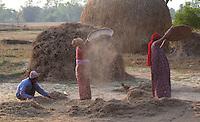 People winnowing on a farm, Bardiya, Nepal