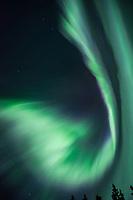 Aurora at Lake Herbert, Alberta, Canada, Isobel Springett