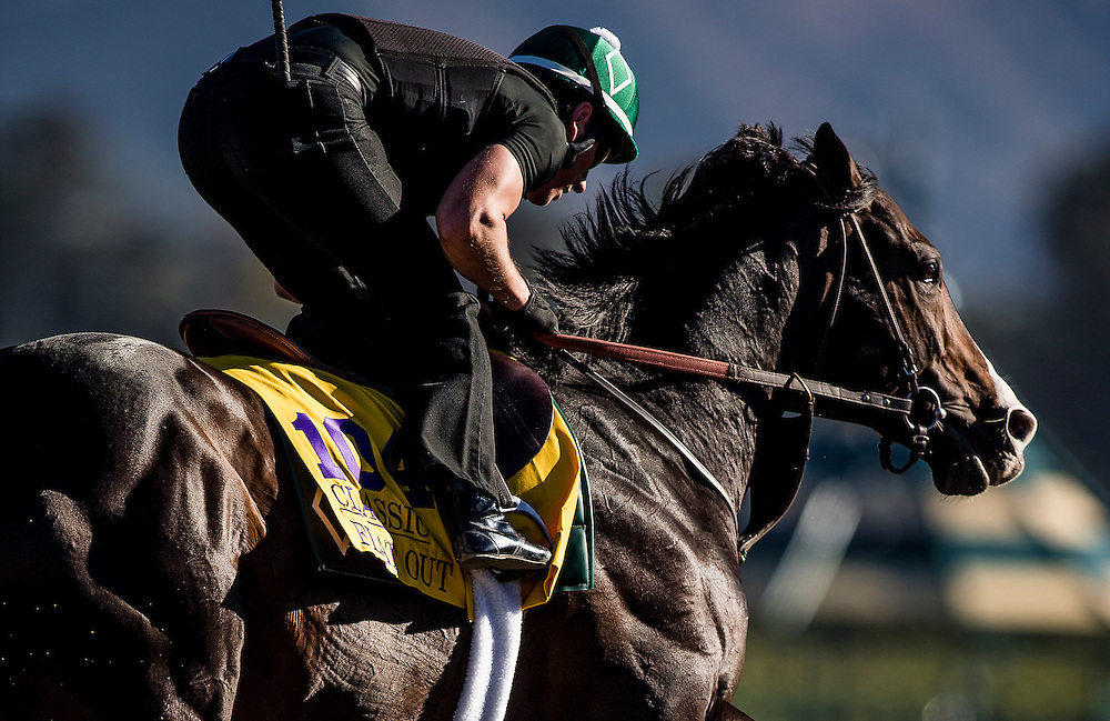 Flat Out trains for the Breeders' Cup Classic at Santa Anita Park in Arcadia, California on October 31, 2013. (Alex Evers/ Eclipse Sportswire)