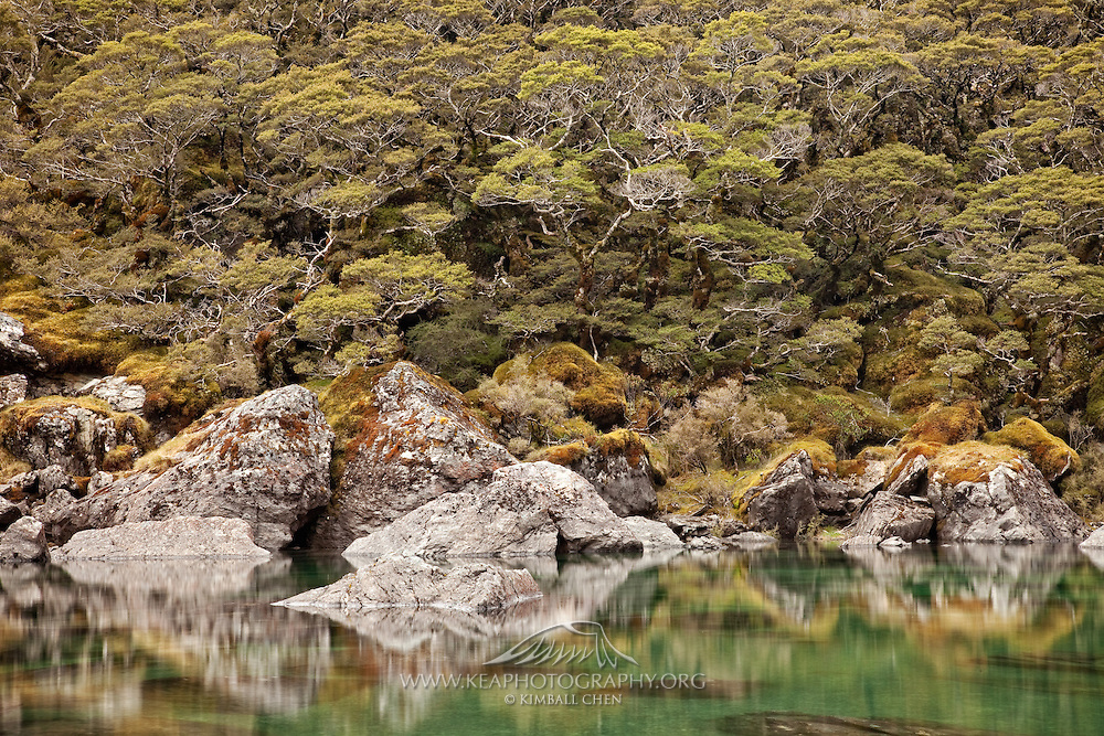 Lake Mackenzie, Fiordland, Routeburn, New Zealand