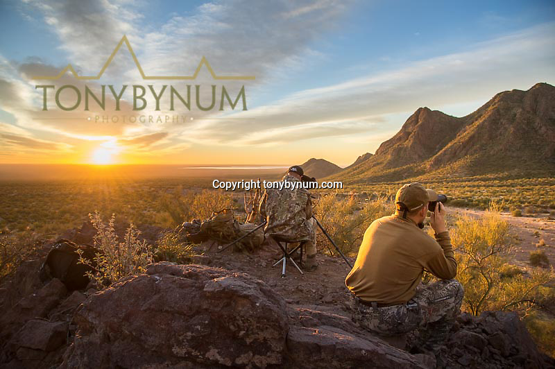 hunting photograph looking though binoculars for desert sheep in sonora mexico