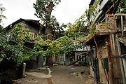 Georgia, Tbilisi, vines in a courtyard