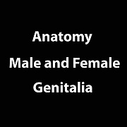 Human Sexuality - Male and Female Genital
