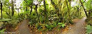 A beautiful fern walk to Macleans water fall, Catlins.