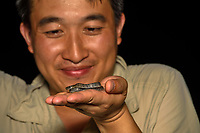 Photographer Wu Ying with a spotted slug snake, Pareas margaritophorus. It is also known as the white-spotted slug snake or mountain slug snake is a small, harmless species of snake. Shek Pik (Chinese: 石壁), southwestern coast of Lantau Island, Hong Kong, China. This Image is a part of the mission Wild Sea Hong Kong (Wild Wonders of China).