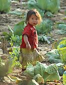 Hmong Village Northern Laos