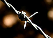 Barbed wire by Ben Phillips