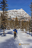 Ski touring on the Baronette Trail in Yellowstone National Park, Wyoming, USA MR