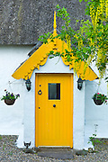 Traditional thatched cottage of lime mortar and whitewash with Laburnum tree, at Rosslare, Ireland