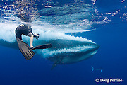Marc Montocchio photographs a Bryde's whale, Balaenoptera brydei or Balaenoptera edeni, as it expells air and water from mouth through baleen after engulfing part of a baitball of sardines, Sardinops sagax, off Baja California, Mexico ( Eastern Pacific Ocean ); MR 411