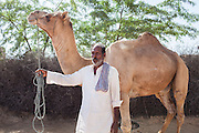 Nitu and Suki's (not their real names) father stands with his camel in Jhaju village, Bikaner, Rajasthan, India on 4th October 2012. Now 18, Nitu was married off at age 10 to a boy of around the same age, but only went to live with her in-laws when she was 12, after she had finished studying up to class 6. The three sisters, aged 10, 12, and 15 were married off on the same day by their maternal grandfather while their father was hospitalized. She was abused by her young husband and in-laws so her father took her back after hearing that her husband, who works in a brick kiln, was an alcoholic and was doing drugs and crime. She had only spent a few days at her husband's house at that time. Her father (now out of the hospital) has said that she will only be allowed to return to her husband's house if he changes his ways but so far, the negotiations are still underway. Her sister, Suki, now age 20, was married off at age 12 but only went to live with her husband when she was 14. Her husband died three years after she moved in, leaving her with a daughter, now 6, and a son, now 4. She has no parents-in-laws and thus returned to her parents house after being widowed because her brother-in-law, who had become the head of the family after his brother's death, had refused to allow Suki to inherit her deceased husband's fair share of agriculture land. Although Suki's father wants her to remarry, she refuses to, hoping instead to be able to support her family through embroidery and tailoring work. The family also makes hand-loom cotton to subsidize their collective household income. Photo by Suzanne Lee for PLAN UK