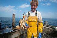 Edible crab caught in lobster pot/creel.