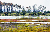 A kayaker blends into the landscape of the salt marshes on the inner portion of Assateague Island national Seashore, a barrier island off Maryland on the Atlantic Ocean, USA.