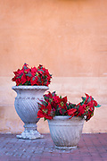 Poinsettias in pots; Old Town Albuquerque, New Mexico.