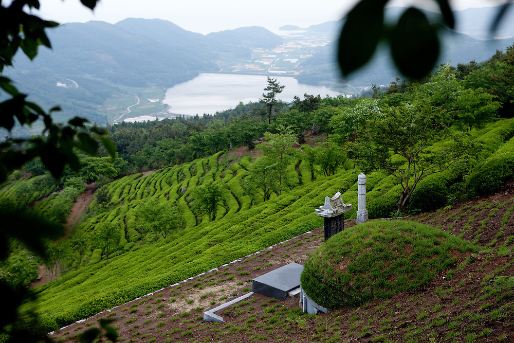 Boseong/South Korea, Republic Korea, KOR, 24.05.2010: Grave in-between green tea fields.