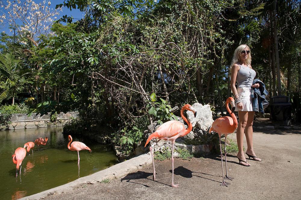 Bahamas, New Providence Island, Nassau, Buxom tourist stands by Caribbean Flamingos (Phoenicopterus ruber) at Ardastra Gardens