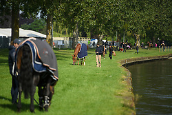 © London News Pictures. 15/05/2016. Windsor, UK. Horses grazing on the banks of the River Thames on the final day of the 2016 Royal Windsor Horse Show, held in the grounds of Windsor Castle in Berkshire, England. This years event is part of HRH Queen Elizabeth II's 90th birthday celebrations.  Photo credit: Ben Cawthra/LNP