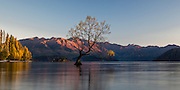 The mountain range sets ablaze as the sun rises at Lake Wanaka, with the famous willow tree emerging out of Lake Wanaka in autumn.