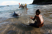 Children tries to pull in a pilot whale caught out at sea by a harpooner. The Indonesian village of Lamalera has hunted whales, sharks and dolphins for the last 500 years. Their method is to leap from a small wooden boat with a long harpoon made of bamboo and spear the animal. Once brought to shore the animal is divided in to parts and distributed to the community, partly for consumption and partly for exchanging with other inland communities for corn and rice..On the 21 May 2009 at the World Oceans Conference, the Indonesian government officially declared 3.5 million hectares of critical marine habitat in the Savu Sea for conservation. Though government representatives have assured that traditional whaling -- which has been supporting the surrounding communities' means of living -- will not be banned in the area immediately outside the zone, concerns still remain. Lamalera is one of the last remaining Indonesian whaling communities and is categorized by the International Whaling Commission as aboriginal whaling..