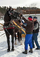 Horse drawn sleigh ride at Bolduc Park Monday, March 25, 2013.