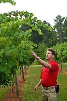 Vance County extension agent Paul McKenzie looks over Backyard Farm & Vineyard's grape production outside Henderson.
