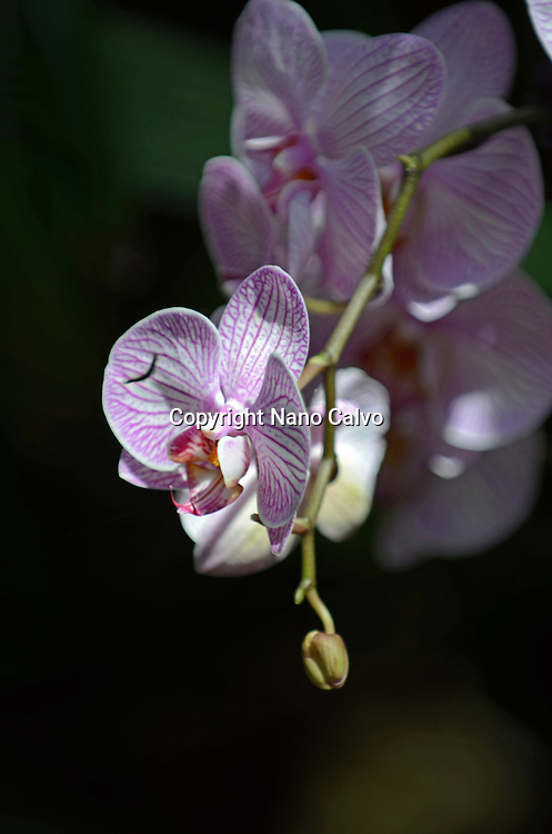 Colorful orchids in garden